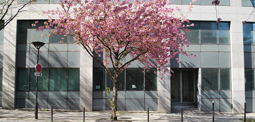 Image of building on EHESS campus with a blossoming tree out front.